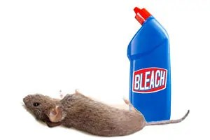 Bleach and dead mouse