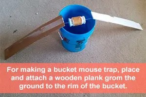 Easy bucket trap instruction
