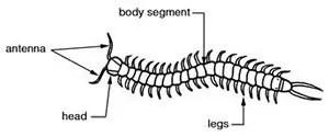 Centipede scheme