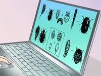 How to get rid of carpet beetle larvae