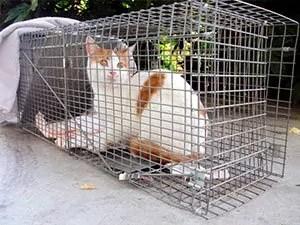 Cat in trap