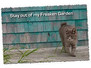 Cats, stay out of my Freaken Garden