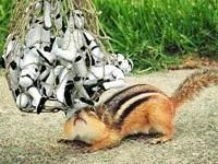 Chipmunk traps