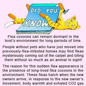 Did you know: a fact about fleas