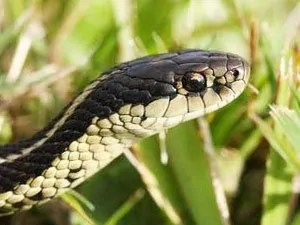 Effective tips on getting rid of snakes around the house