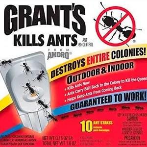 Grant's Kills Ants