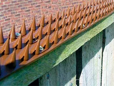 Best 5 Bird Spikes 2019 Updated Review Amp Buyer S Guide