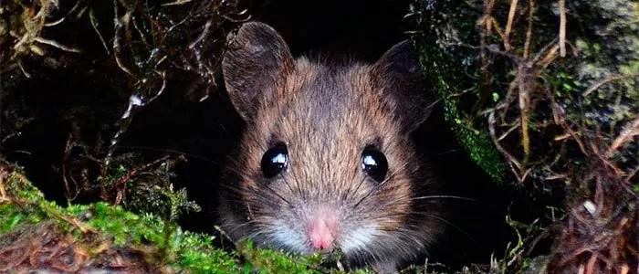 Hiding mouse