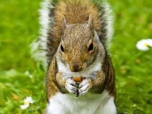 How to keep squirrels away from your garden and house - How to keep squirrels away from garden ...