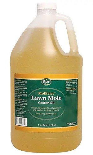 Lawn Mole by MolEvict