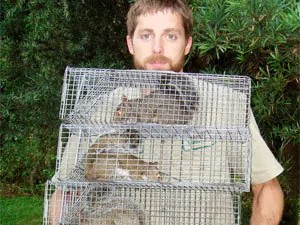 Live traps to keep squirrels