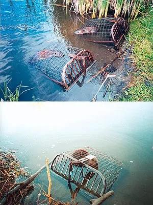 Live Beaver Traps