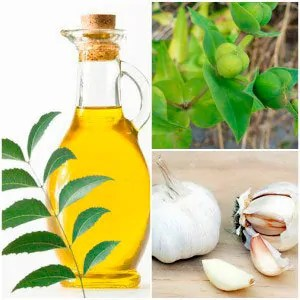 Neem oil, garlic and plant