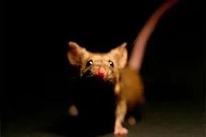 Mouse in dark