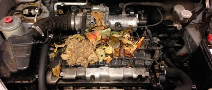 Mice nest in engine block