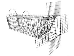 How to Trap a Squirrel? All Types of Cages for Catching
