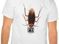 Palmetto bug
