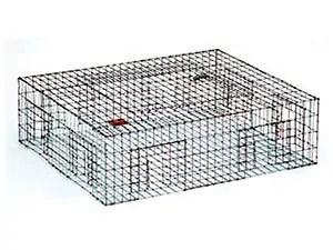 Humane pigeon trap safeguard