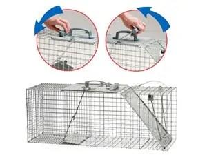 Possum traps setting