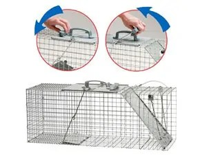 Possum traps setting