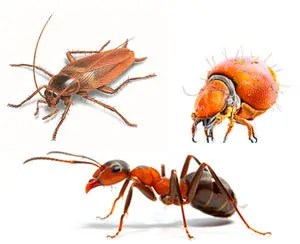 Bed Bug Predators