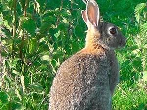 Rabbit eat plants