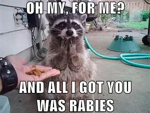 Oh my, for me? And all I got you was rabies