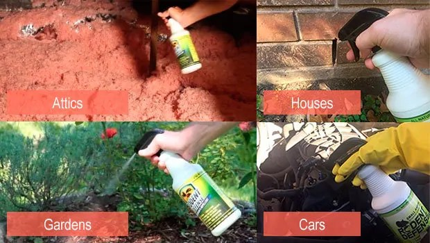 Rodent defense for Attics, Gardens, Cars, Houses