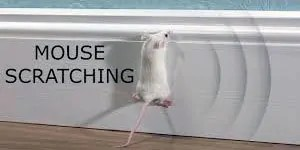 Mouse scratching