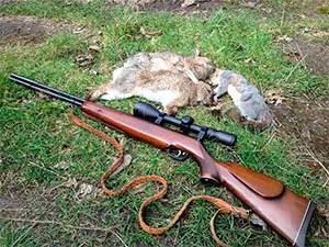 Shooting rabbits