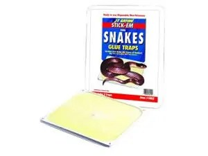 Snakes glue traps at Home Depot