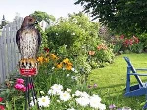 Solar rotating owl