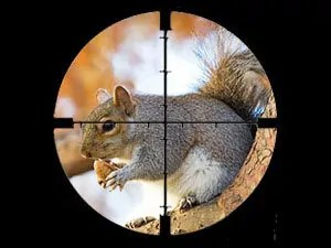Kill squirrel by shooting