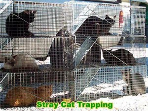 Stray cats trapping