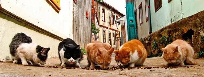 Feral cats is a big problem