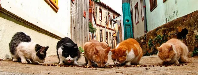 Feral cats is a big problem