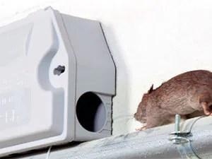 Rats trap