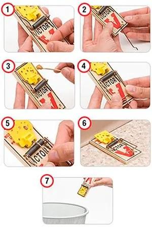Victor Trap Setup Instructions