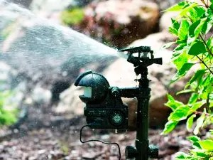 Using Motion-Activated Sprinkler