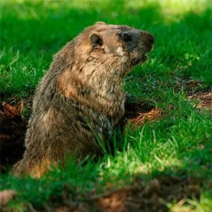 Groundhogs problems