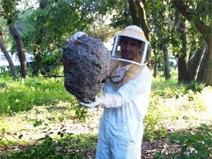 How to exterminate yellow jackets nests