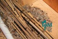 How to Get Rid of Carpenter Ants: Methods to Kill ...
