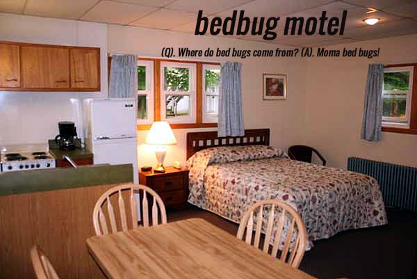 bed bugs motel