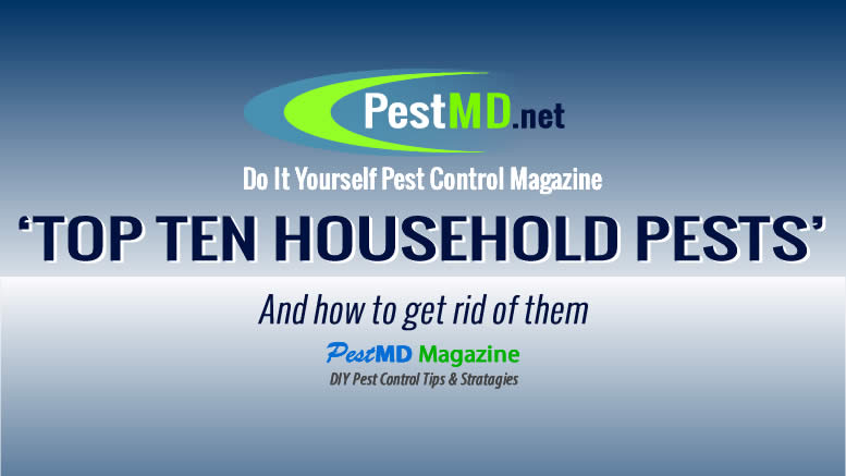 Top Ten Household Pests in the US. Learn to DIY pest control and keep your home or business a pest free zone. DIY and control the top ten household pests.