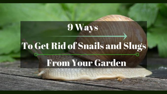 how to get rid of snails in pond