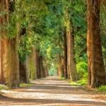 מדוע צבע העצים הוא ירוק?