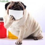 犬の口臭の原因!対策や改善の方法、おすすめのスプレーやサプリは?