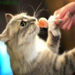 猫のおやつのおすすめ!無添加で安全、通販で人気の中からご紹介!