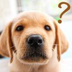 犬のケージを自作!簡単な作り方や必要な材料、道具とは?