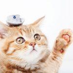 猫のケージを自作!簡単な作り方や必要な材料、道具とは?